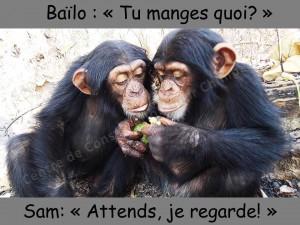 Sam et Bailo 2013
