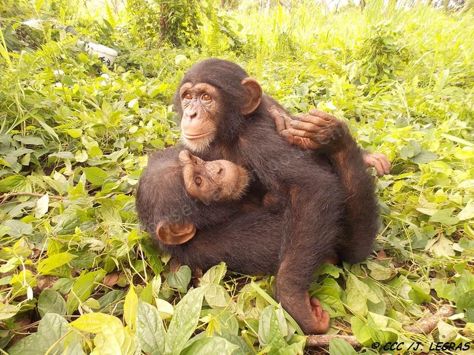 Tango hugs N'Dama