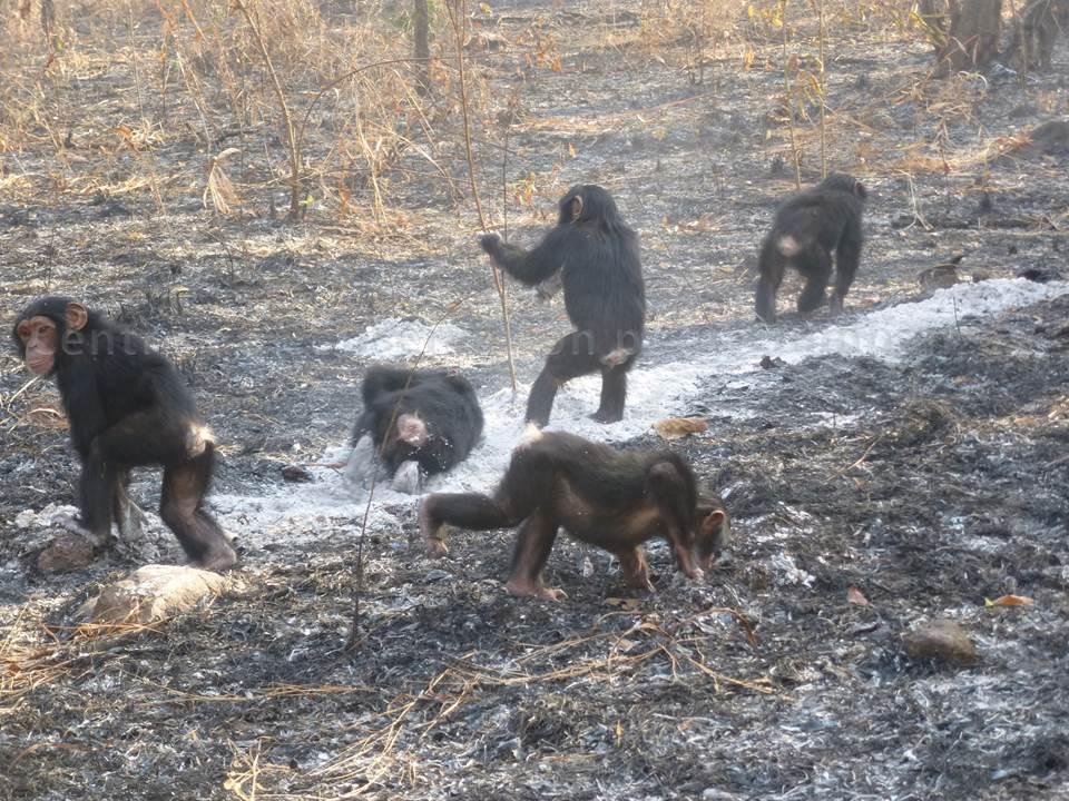 Le groupe des nursery découvre la brousse après le passage du feu Photo © L. Jacquet - CCC