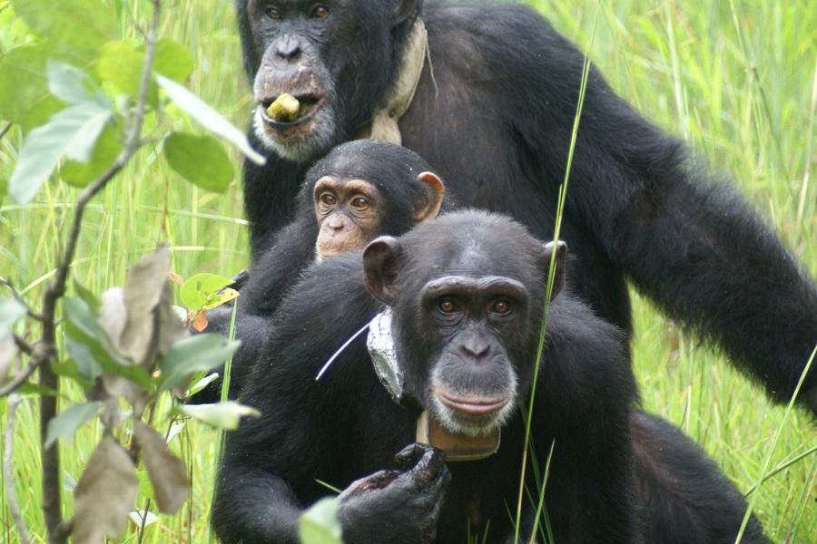 Robert, avec Lola et Siala sur le dos de sa mère Photo CCC/S.Origine