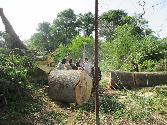 Le tronc est énorme! Photo CCC/DR