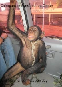 sanka in car