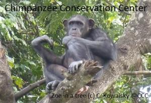 Camille Kowalsky - Zoé dans arbres 12.2012 (2) pr FB
