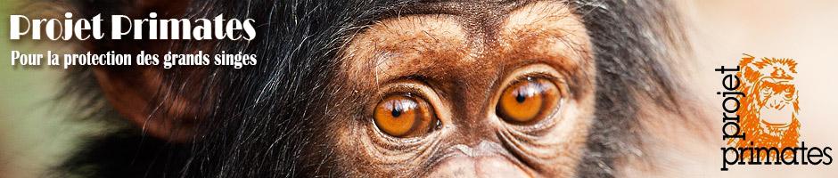Projet Primates