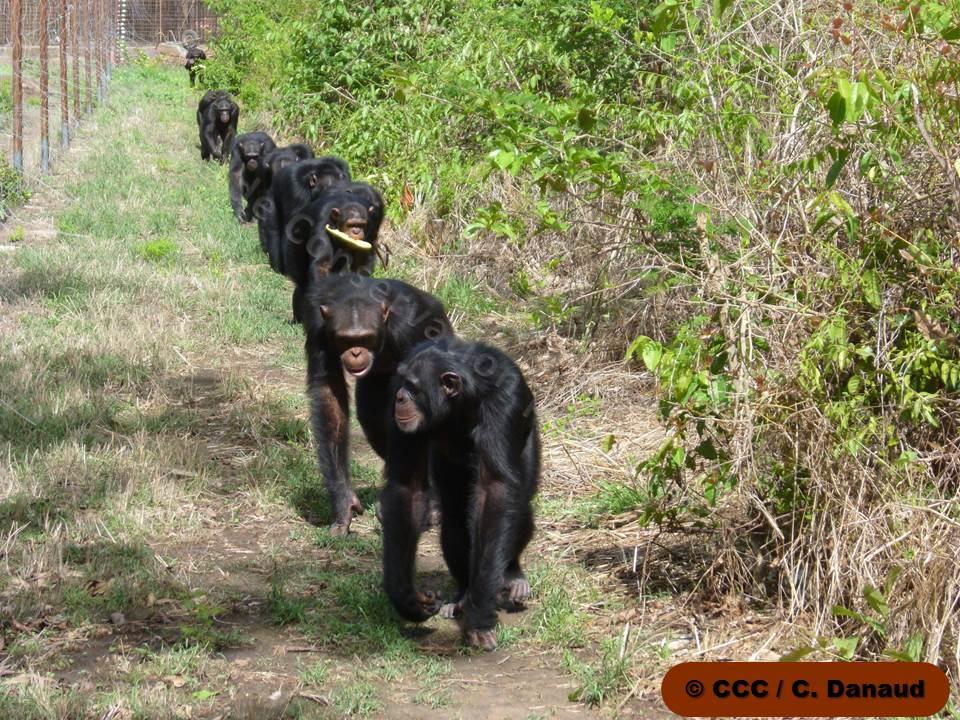 Le groupe des ados dans leur enclos Crédit photo C.Danaud