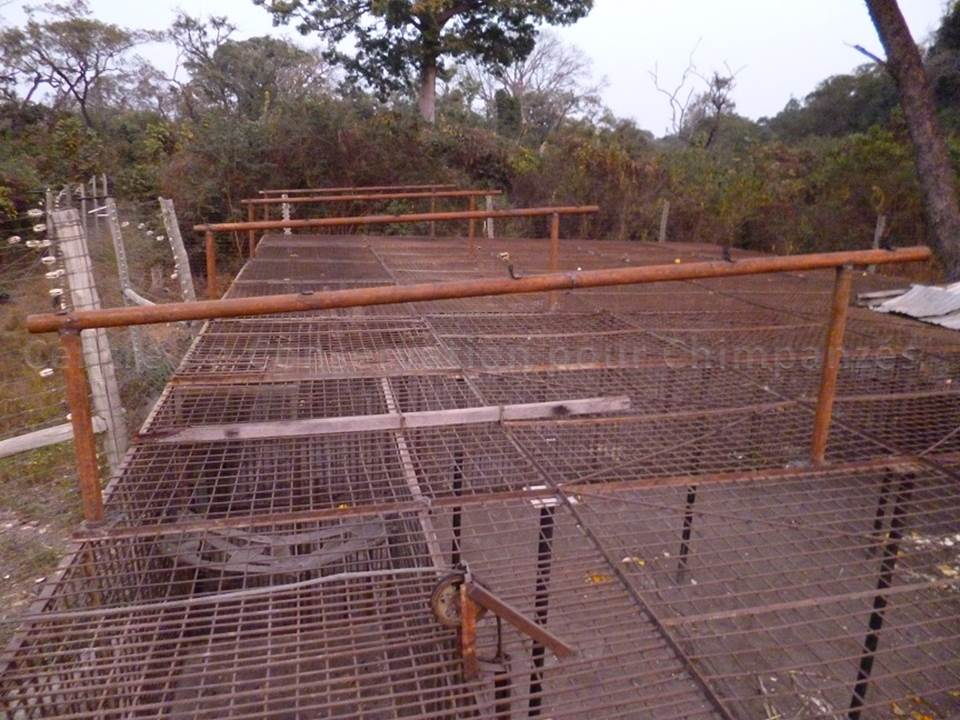 Metallic frame on the adult chimpanzees cage - Photo  CCC