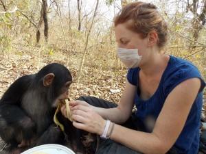 Soin au chimpanzé