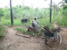 Cyril et Kourouma travaillent sur l'enclos Photo CCC