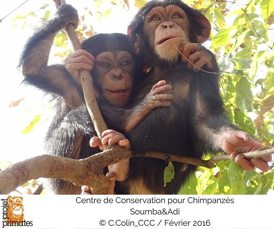 Adi&Soumba FR