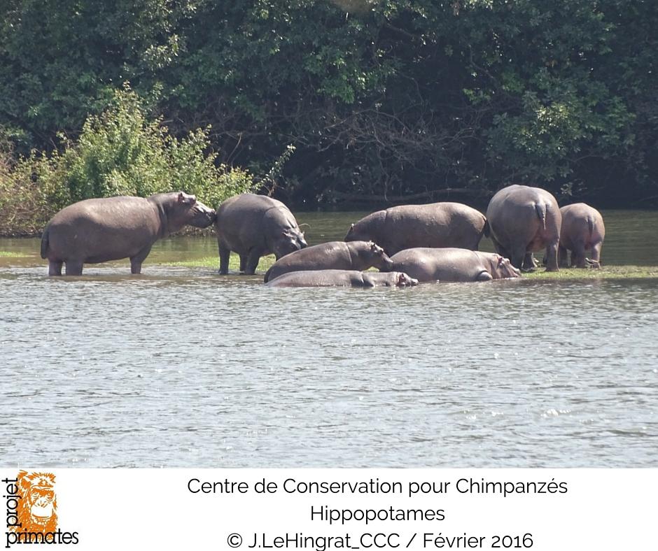Hippo FR
